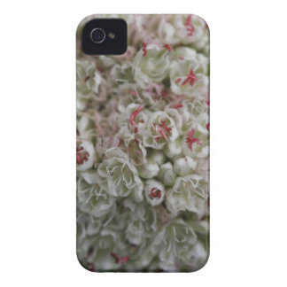 Macro Cluster of Tiny Flowers iPhone 4 Case