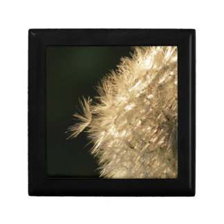 Macro Dandelion Gift Box