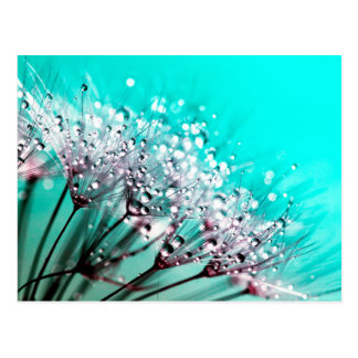 Macro Dandelion Seeds Water Drops Photo Postcard