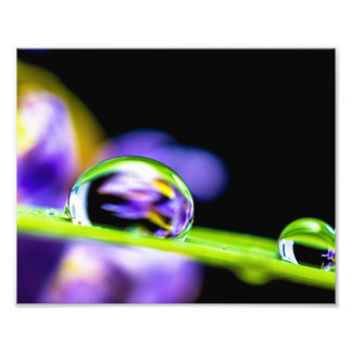 Macro Drop of Water on Blade Grass Purple Flower Photo Print
