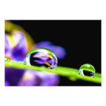 Macro Drop of Water on Blade Grass Purple Flower Photographic Print