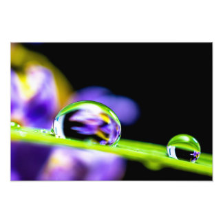 Macro Drop of Water on Blade Grass Purple Flower Photographic Print