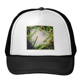 Macro feather hats