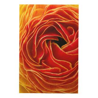 Macro Flower | Flower Fields Carlsbad, CA Wood Print