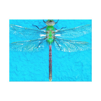 Macro Green Dragonfly on Blue Background Canvas Print