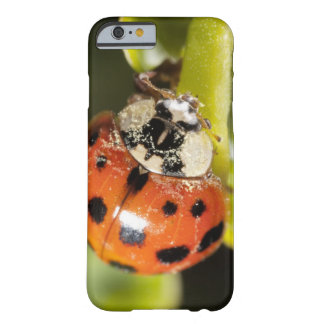 Macro; Horizontal; Colour; Color; Nobody 2 Barely There iPhone 6 Case