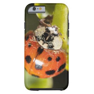 Macro; Horizontal; Colour; Color; Nobody 2 Tough iPhone 6 Case
