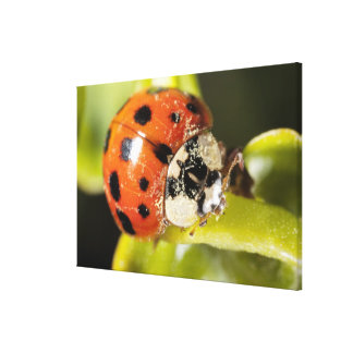 Macro; Horizontal; Colour; Color; Nobody Canvas Print