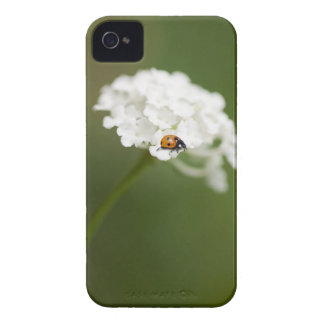 Macro image of a Ladybird on a wild flower iPhone 4 Case-Mate Case
