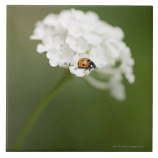 Macro image of a Ladybird on a wild flower Large Square Tile