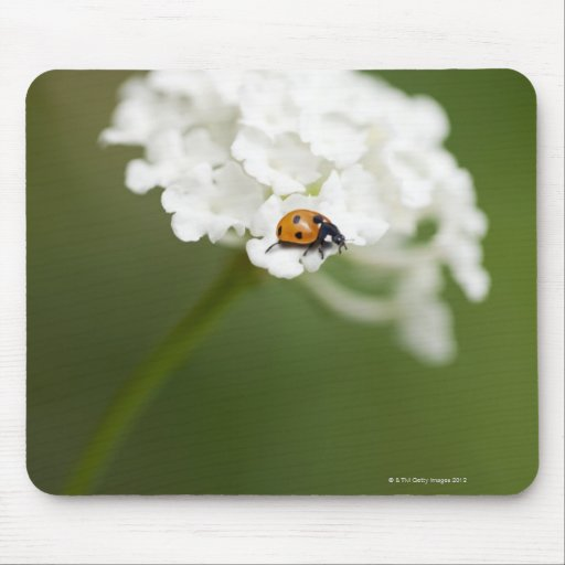 Macro image of a Ladybird on a wild flower Mouse Pads