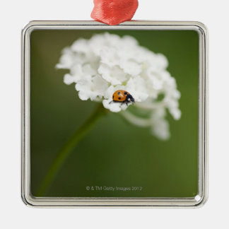 Macro image of a Ladybird on a wild flower Silver-Colored Square Decoration