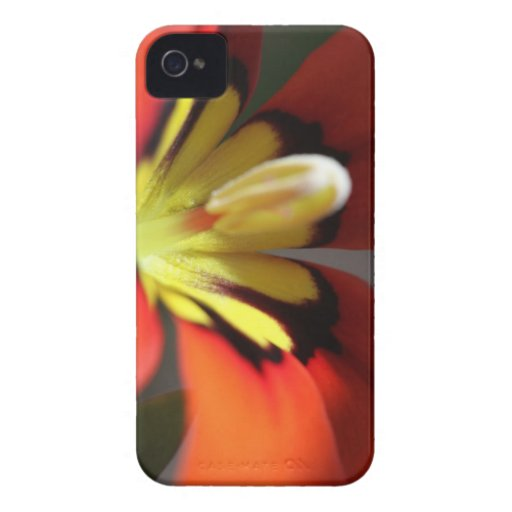 Macro Mexican Shellfish iPhone 4 Case-Mate Cases