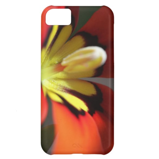 Macro Mexican Shellfish Cover For iPhone 5C
