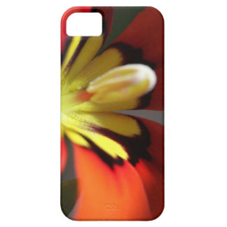 Macro Mexican Shellfish iPhone 5 Cover