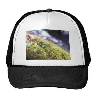 Macro Moss Cap