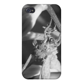 Macro moth Iphone Case iPhone 4 Covers