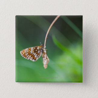 Macro of a butterfly- Boloria euphrosyne on 15 Cm Square Badge