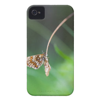 Macro of a butterfly- Boloria euphrosyne on iPhone 4 Case-Mate Cases