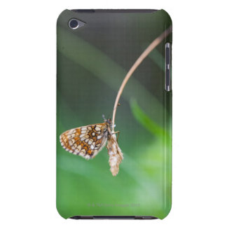 Macro of a butterfly- Boloria euphrosyne on iPod Touch Case