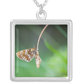 Macro of a butterfly- Boloria euphrosyne on Silver Plated Necklace