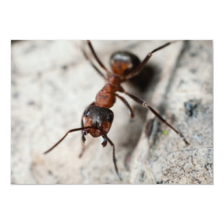 Macro of red ant 13 cm x 18 cm invitation card