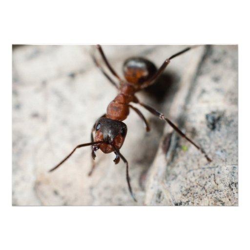Macro of red ant custom invites