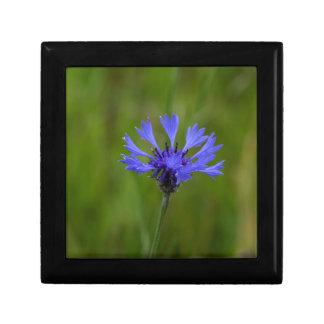 Macro photo of a cornflower (Centaurea cyanus) Small Square Gift Box