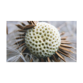 Macro Photograph of a Dandelion & Seeds on canvas