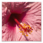 Macro Pink Hibiscus Flower
