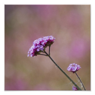 Macro Purple and Pink Flowers Poster