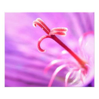 Macro Purple & Pink Stamen Flower Photo