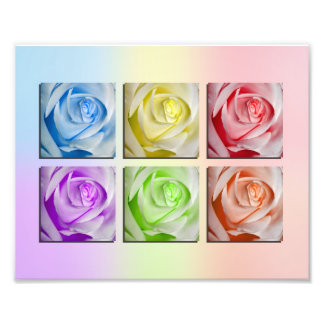 Macro Rainbow Roses Photo Print