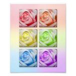 Macro Rainbow Roses Portrait