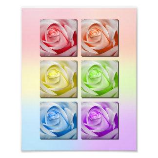 Macro Rainbow Roses Portrait Photo Print