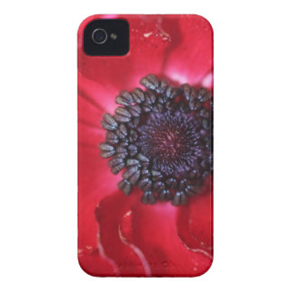 Macro Red Anemone iPhone 4 Case-Mate Case