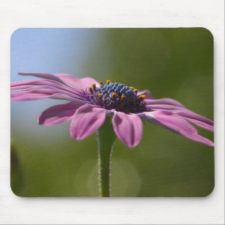 Macro Shot Of A Purple Osteospermum Mouse Pad