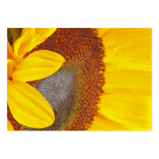 Macro Sunflower Profile Card Business Card