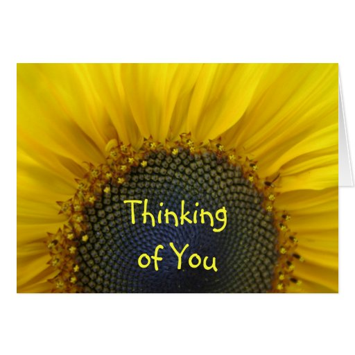 Macro Sunflower Thinking of you Card