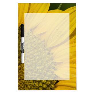 Macro Sunflower With Raindrops Dry Erase Board