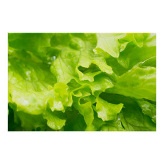 Macro view of the leaves of lettuce in a salad poster