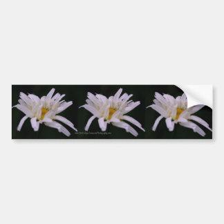 Macro White Daisy Flower Bumper Sticker Car Art