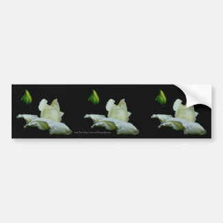 Macro White Rosebud Flower Bumper Sticker Car Art