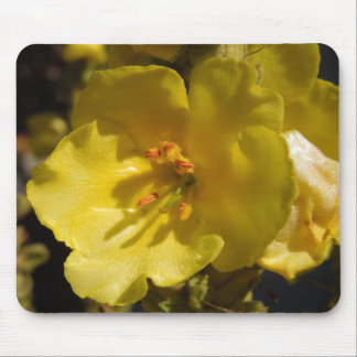 Macro Yellow Clary Sage Flower Mouse Pad