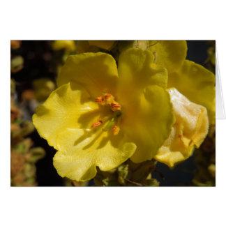 Macro Yellow Mullein Flower Greeting Card