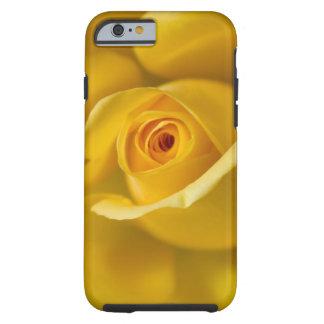 Macro Yellow Rose Tough iPhone 6 Case