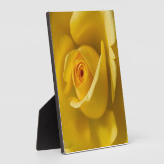 Macro Yellow Rose Plaque
