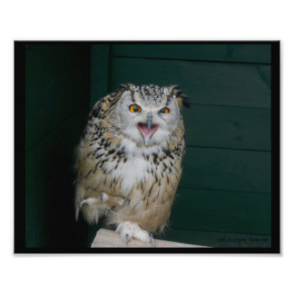 Mad Owl Photo Print