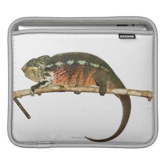Madagascar 2 iPad sleeve