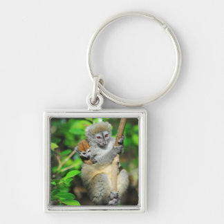 Madagascar, Andasibe, Ile Aux Lemuriens, Mother Key Ring
